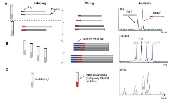肽段定量分析策略示意图
