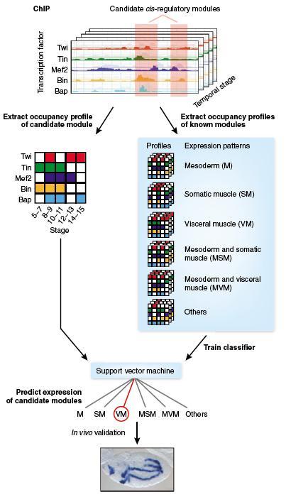 chip技术与基因表达调控研究