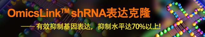 shRNA表达克隆