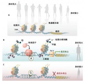 Genetics driving epigenetics