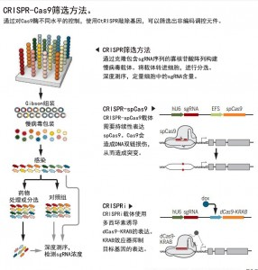CRISPR-Cas9筛选方法