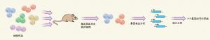 白血病基因风险谱