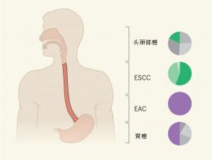 癌症的分子分类