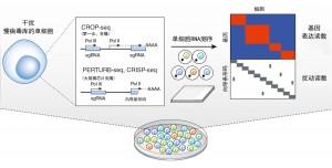 基因筛查进入单细胞时代