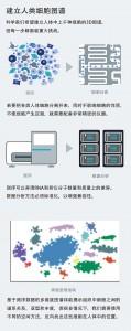 建立人类细胞图谱