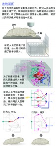 如何测绘神经回路2.3