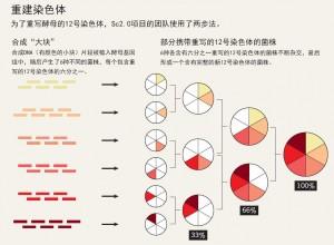 重建染色体