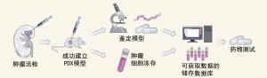 癌症治疗新曙光:癌症建模