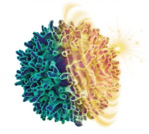 让免疫细胞节食1