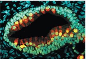 人类3D干细胞2
