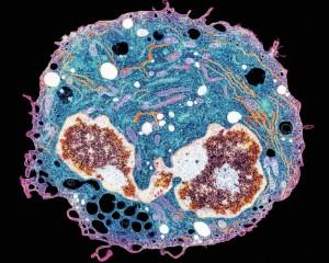 免疫学单细胞研究新技术1