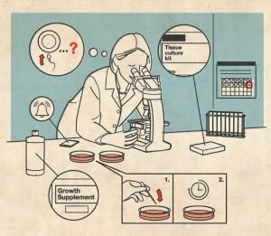 胚胎组装101