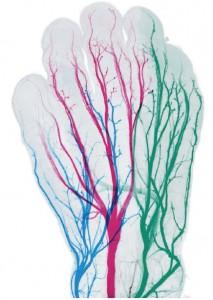 胚胎组装101(2)