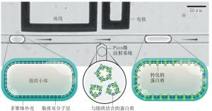 人工细胞生产线