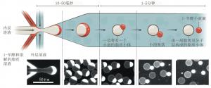 脂质小体制造技术