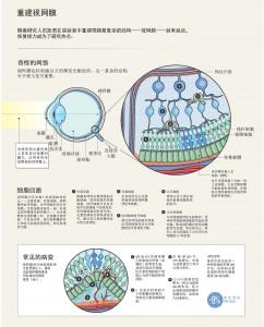 重建视网膜1