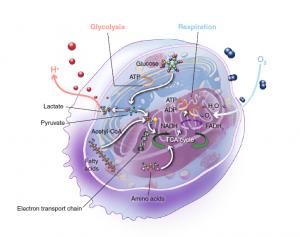 如何追踪肿瘤的代谢线索