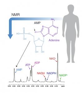 如何追踪肿瘤的代谢线索2