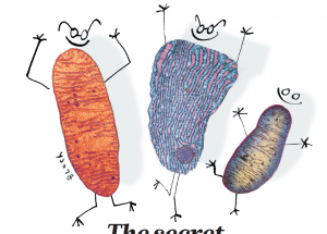 细胞器互作变革生物研究1