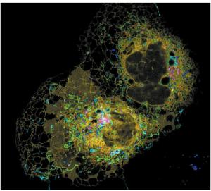 细胞器互作变革生物研究2