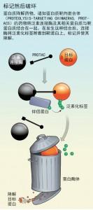 蛋白清除药物或前途无量2