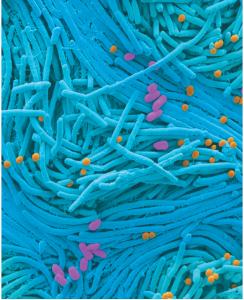 未来10年人类微生物组学研究展望1