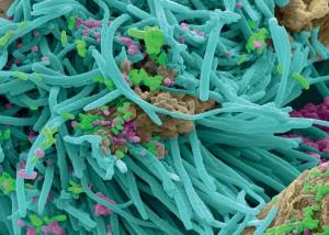 微生物化学成为新焦点1