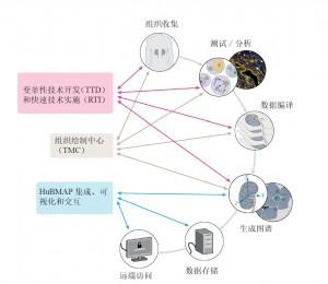图1. HuBMAP组织