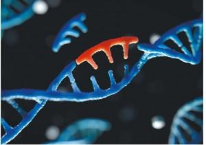 Prime editing纠正点突变,有望治愈遗传病