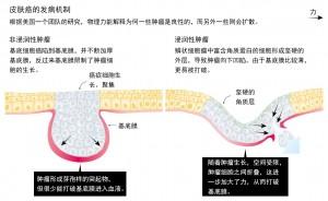 机械力控制胚胎生长,生命成形2