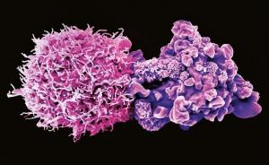 追踪癌症干细胞的起源1