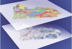 单细胞分析进入多组学时代